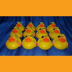 12 Powder Monkey Pirate Rubber Ducks